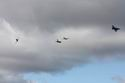 F-16D Fighting Falcon 88-166 ~ 421st FS