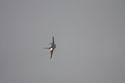 F-16C Fighting Falcon 89-2083 ~ 4th FS